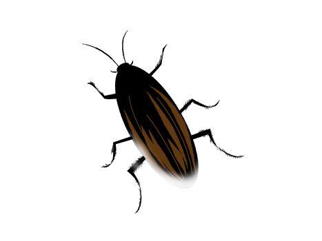 ゴキブリの天敵をまとめて紹介!最大の天敵アシダカクモとは?