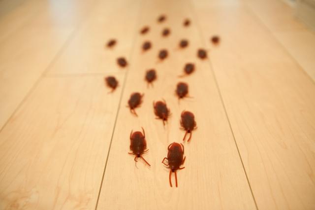 地球上でもっとも頼れる「ゴキブリ最大の敵」は…