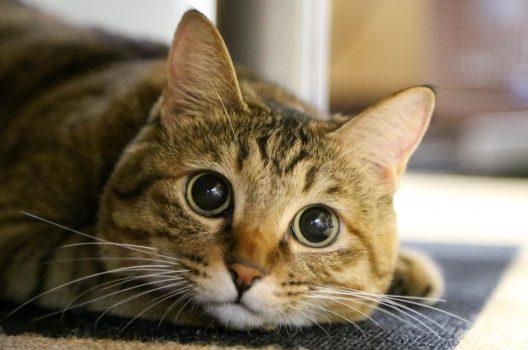 猫がゴキブリを増やす事例も……