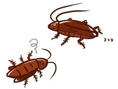 猫はゴキブリを食べるし増やす!?感染症と持ち込みを防ぐ方法