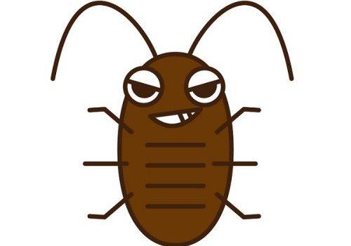 ゴキブリ駆除と消毒はセットでやろう|再び現れるのを防ぐ対策法とは